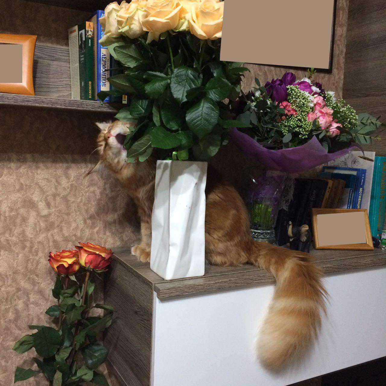 Кот с цветами фото с днем рождения