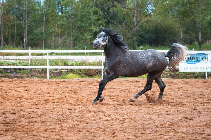 Хуи коня