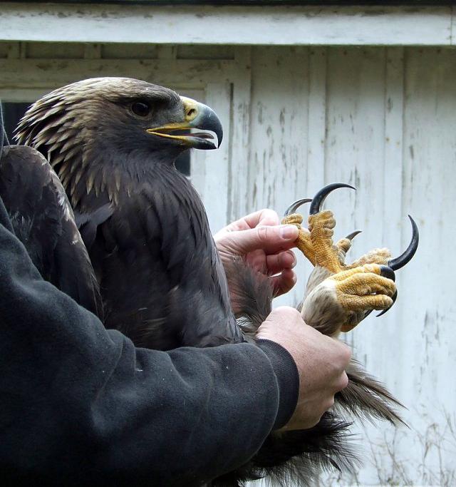 Какой пиздатый орел