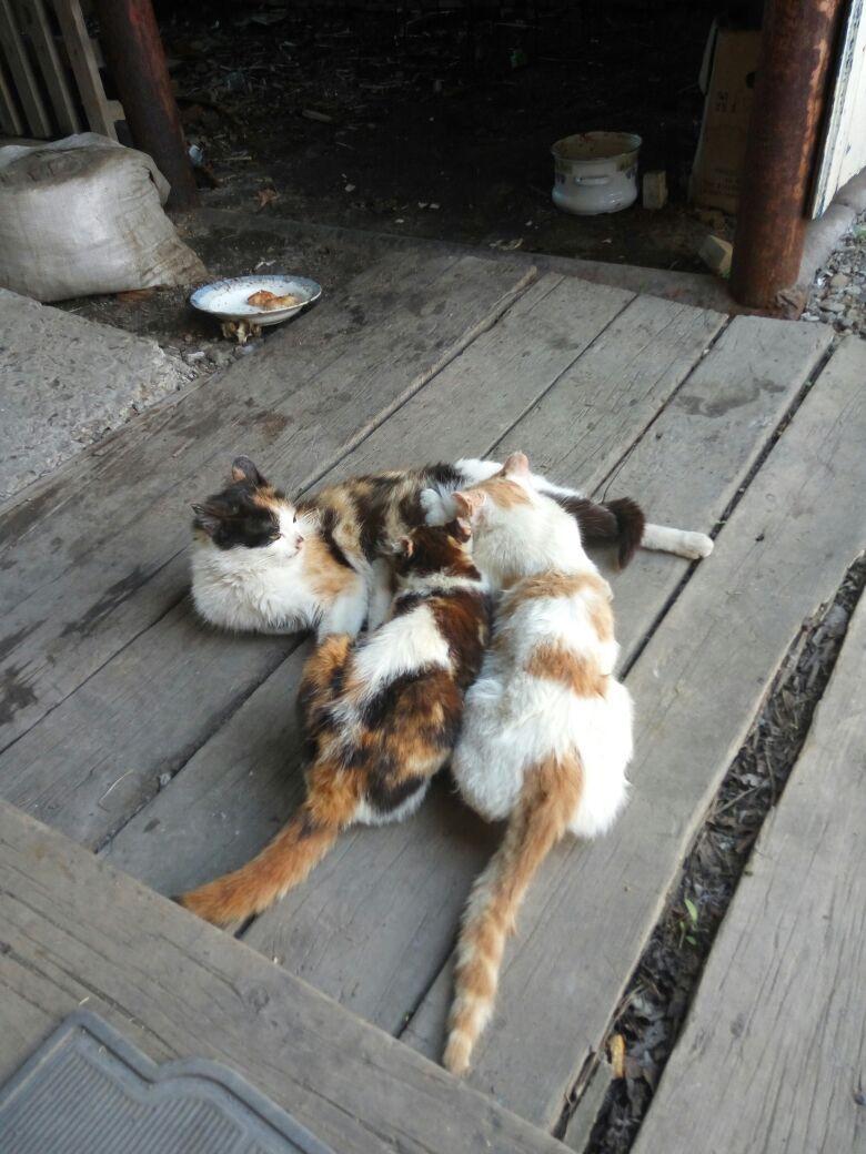 Котята Сосут Сиську
