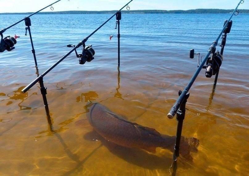 как скачать игру рыбалка