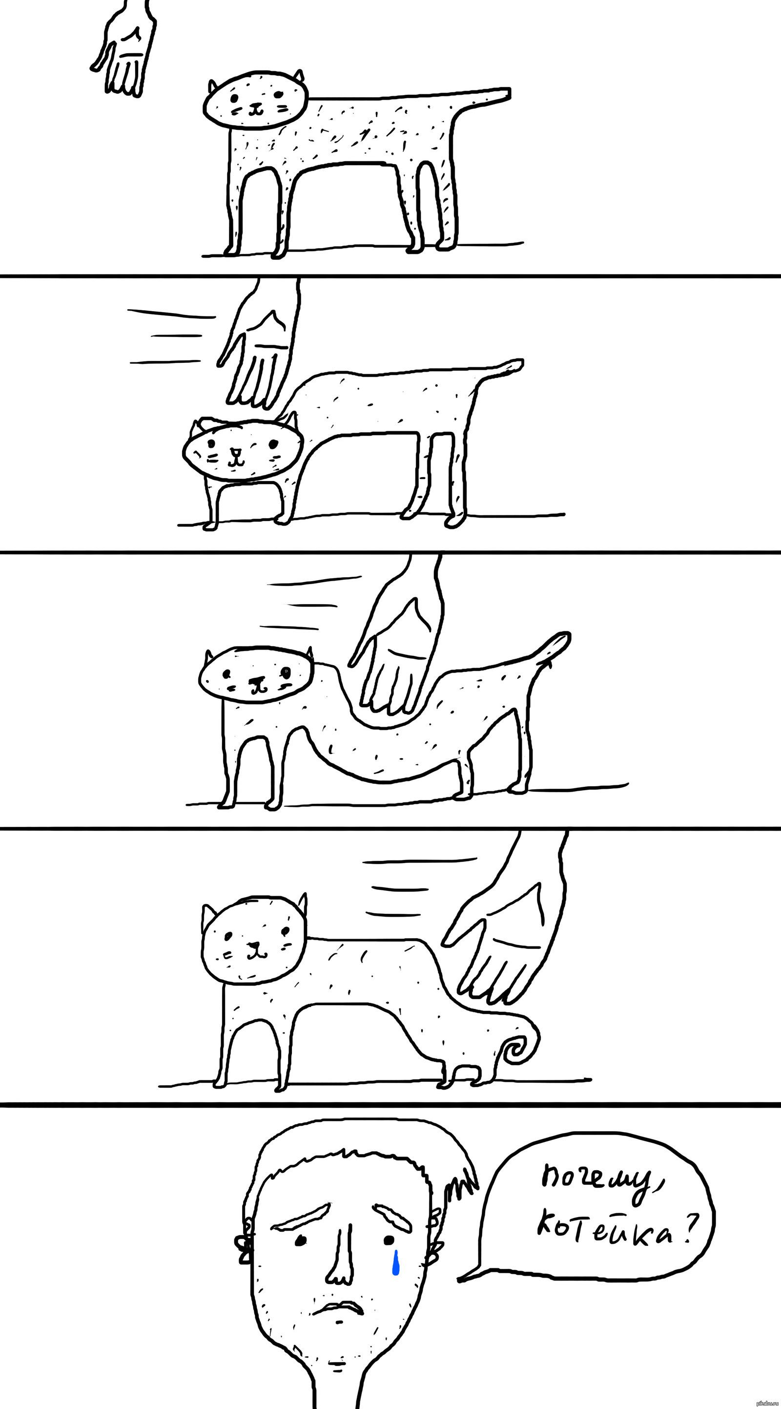 Имя кота из 4 букв