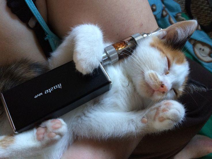 Кот сигаретой фото
