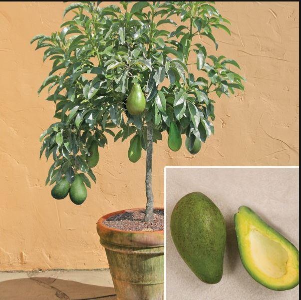Как вырастить авокадо, ананас, киви и многое другое в домашних условиях