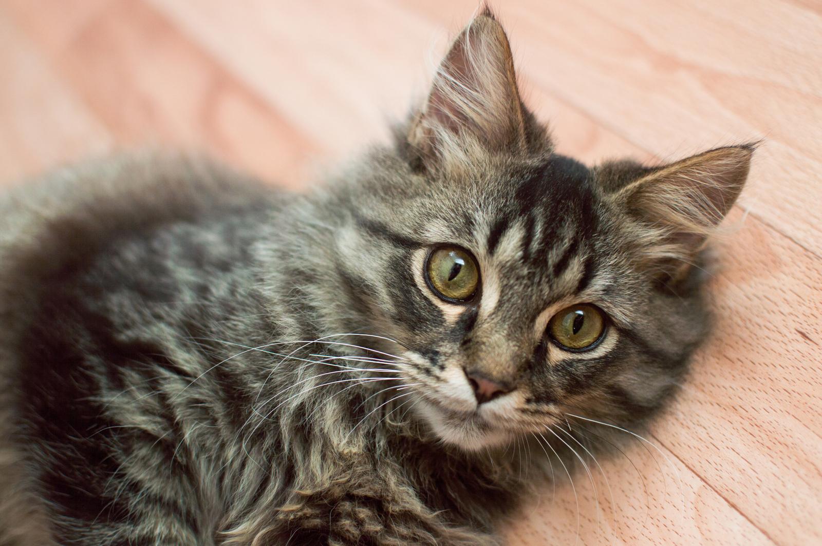 Ищу хозяина кота