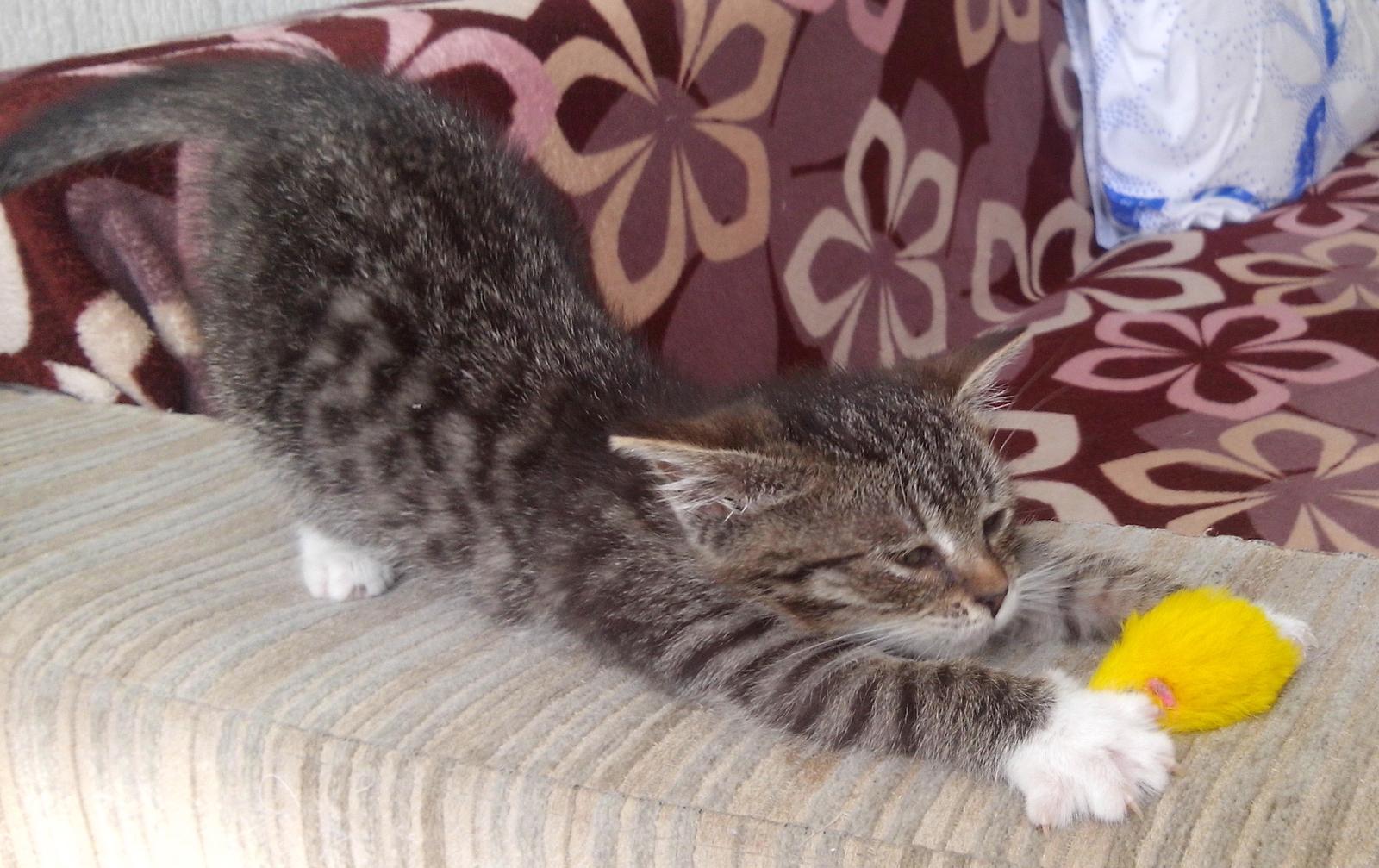 Месячный кот
