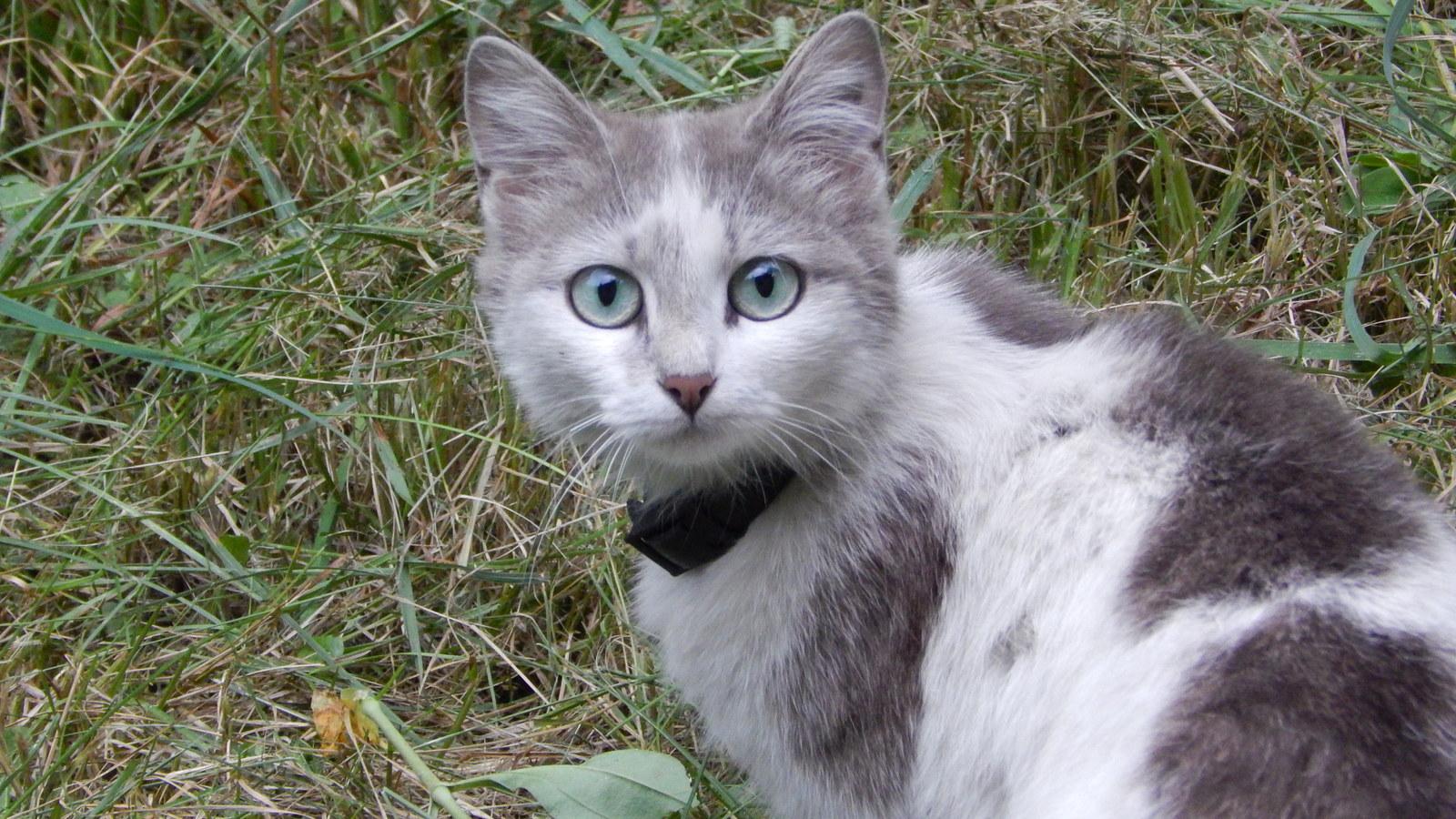 Кот на охоте картинки