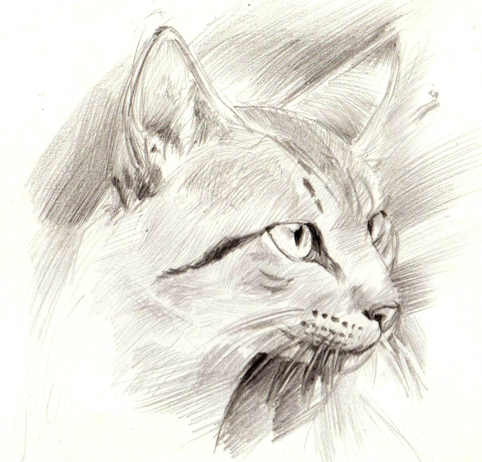 Арт коты карандашом