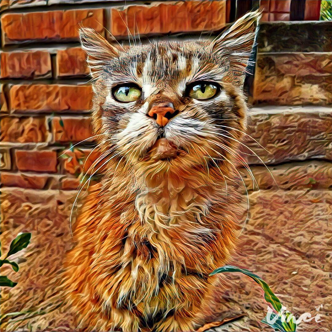 Приложение кот на фото с