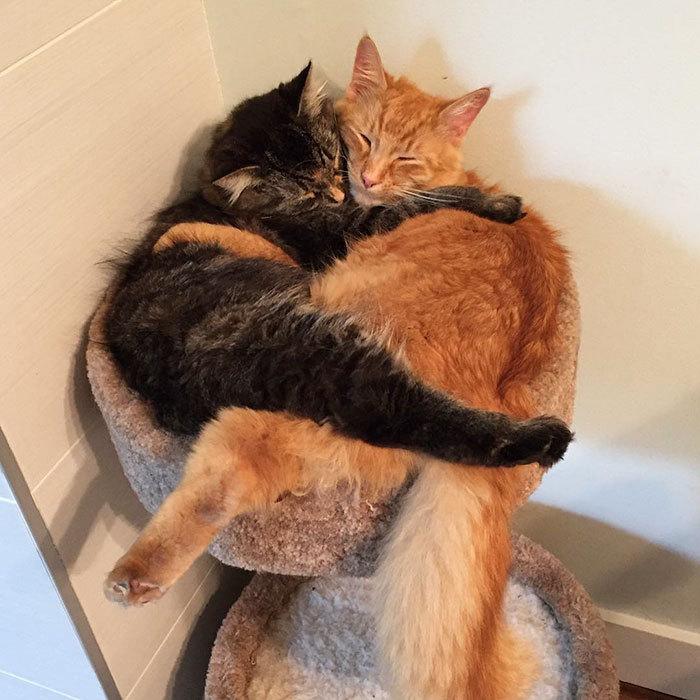 спать вместе картинки