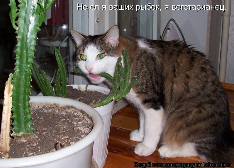 Что добавлять коту чтобы ел