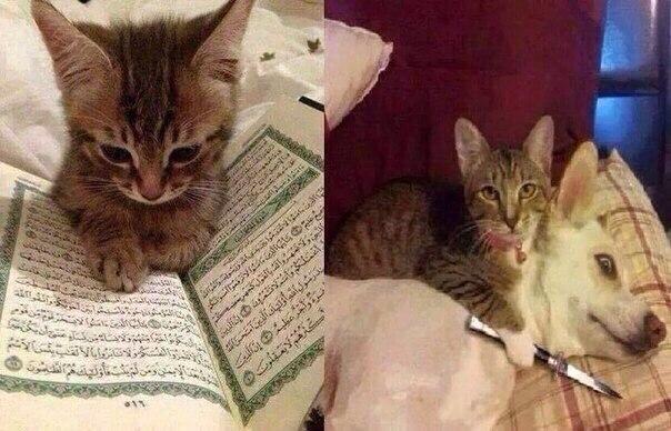 кот террорист