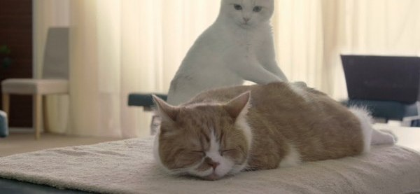 Cat massage bed