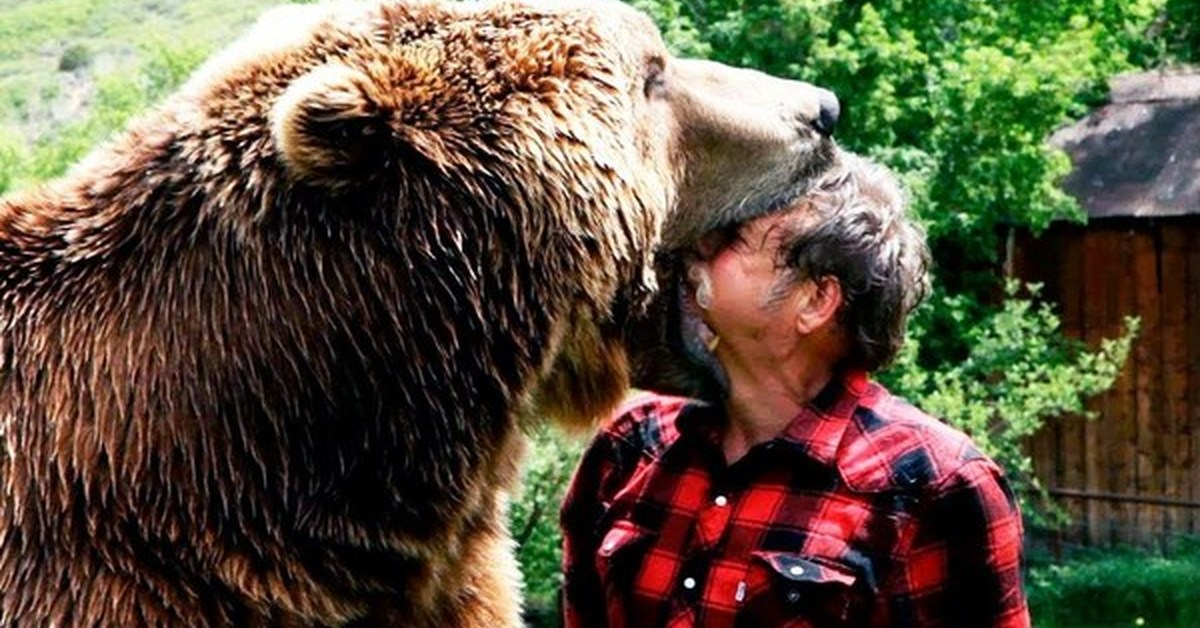 grizzly bear attacks - HD2197×1463
